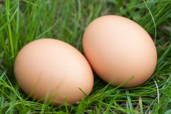 Two chicken eggs lying in a nest of green grass Royalty Free Stock Photography