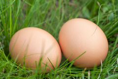 Two chicken eggs lying in a nest of green grass Stock Image