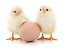 Two Chickens And Egg Royalty Free Stock Image