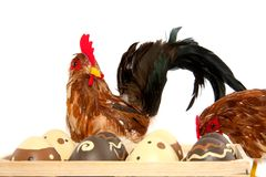 Two chickens and easter eggs Royalty Free Stock Photography
