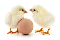 Two chickens and egg. Brown egg and two chickens  on white background Stock Photo