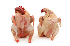 Two chickens raw Stock Photos