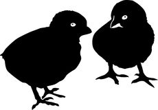 Two chickens silhouettes Royalty Free Stock Images