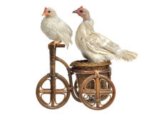 Two chickens travelling on wooden tricycle Royalty Free Stock Image