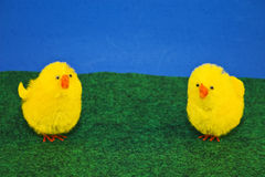 Two Chicks. Two yellow spring chicks against blue background on green turf Royalty Free Stock Image