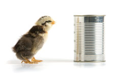 Two chicks and a tin can Stock Photography