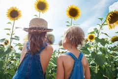 Two children are exploring flower sunflower outdoors royalty free stock images