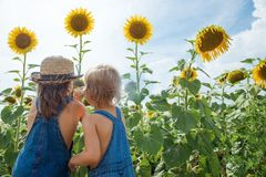 Two children are exploring flower sunflower outdoors stock images