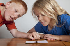Two children observing bug Stock Image