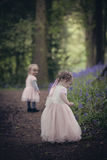 Two children on a path in a wood full of bluebells Royalty Free Stock Photos