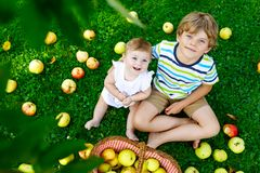 Two children picking apples on a farm in early autumn. Little baby girl and boy playing in apple tree orchard. Kids pick. Fruit in a basket. Siblings eating royalty free stock images