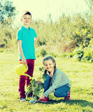Two children planting a new tree Stock Images