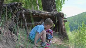 Two children play near a big tree. The roots of a coniferous tree grow outside the earth. Beautiful summer landscape. Two children play near a big tree. The stock footage
