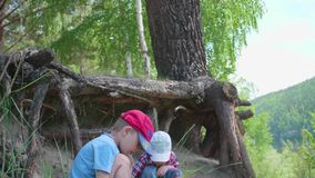 Two children play near a big tree. The roots of a coniferous tree grow outside the earth. Beautiful summer landscape. Two children play near a big tree. The stock video footage