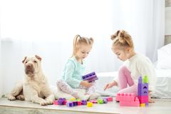 Two children play plastic toys blocks. Dog and girls. The concep. T of lifestyle, childhood, upbringing, family Stock Photo
