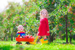 Two children playing in an apple garden Stock Images