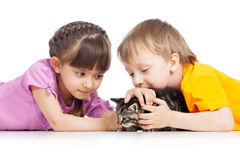 Two children playing with kitten Royalty Free Stock Images