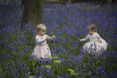 Two children playing in a wood full of bluebells. Two girls picking bluebells in spring woodland Stock Images