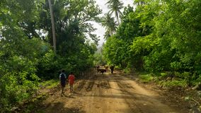 Two children walking on the main road leading around Pentecost island, Vanuatu royalty free stock image