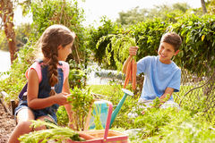 Two Children Working On Allotment Together Royalty Free Stock Images