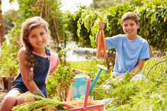 Two Children Working On Allotment Together Royalty Free Stock Photo