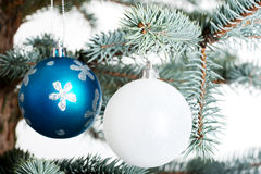 Two christmas balls on a twig. Stock Images