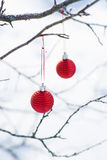 Two christmas balls. On twigs outdoors Stock Photo