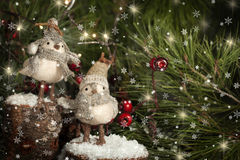 Two Christmas Birds. Wearing winter hats and scarves standing on snow covered tree stumps with pine boughs and red decorative berries blurred in background Royalty Free Stock Photo