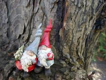 Two Christmas garden gnomes in the forest, in front of an old tree trunk. Two Garden gnomes with a small christmas tree in front of an old tree trunk royalty free stock image