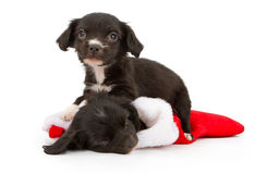 Two Christmas Puppies Stock Photography