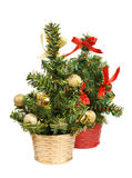 Two christmas tree Stock Image