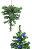 Two Christmas trees Stock Photo