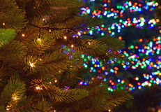 Two Christmas trees with different lights, white and colorful Stock Image