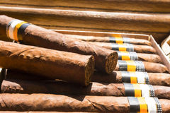 Two cigars in a humidor full of cigars Stock Photos