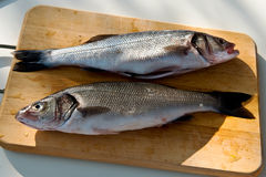 Two cleaned uncooked fresh bass Stock Images