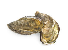 Two closed oysters on white Stock Photos