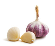 Two cloves and bulb of garlic. Isolated on a white background Royalty Free Stock Photo