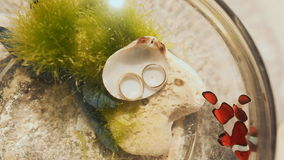 Two clown fish in an aquarium with wedding rings.  stock footage
