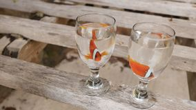 Two clown fish float in water in two glass bowls on an exotic coast. The wedding idea of the couple. Philippine exotic. Two clown fish float in water in two stock video footage