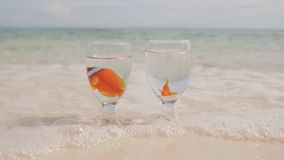 Two clown fish float in water in two glass cups on an exotic coast. Bowls with fish in the sand washed by the ocean. Water. Wedding idea stock video footage