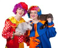 Two clowns with rabbit and raccoon. Royalty Free Stock Photo