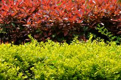 Two clump of foliage plants Stock Photos