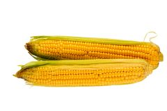 Two cobs of corn stock photos