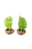 Two cockleshell from a walnut shell with leaf sails Stock Photos