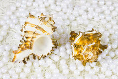 Two cockleshells and beads of pearls Royalty Free Stock Images