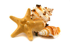 Two cockleshells and starfish Royalty Free Stock Photography