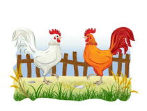 Two cocks in country side. Outdoor scene with fence Royalty Free Stock Photography