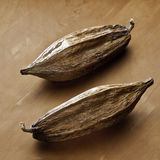 Two cocoa pods on a wooden background. Two cocoa pods on a brown wooden background Stock Image