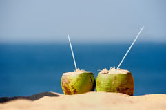Two Coconut Royalty Free Stock Photography