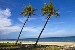 Two coconut and blue sky Stock Photos